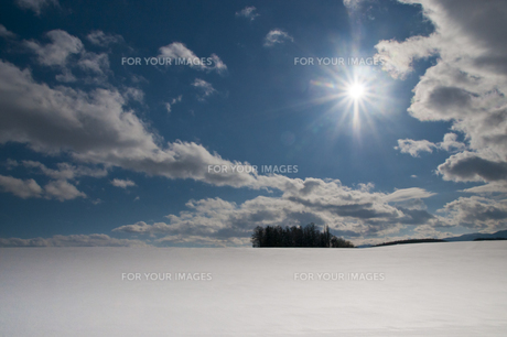 冬の太陽とカラマツ林の写真素材 [FYI00889608]