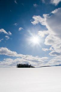 冬の太陽とカラマツ林の写真素材 [FYI00889609]