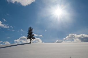 冬の太陽と雪原に立つ松の木の写真素材 [FYI00889612]
