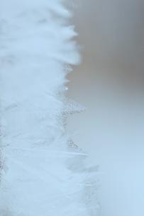 自然が織りなす霜の結晶の写真素材 [FYI00889616]