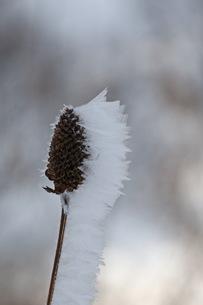 自然が織りなす霜の結晶の写真素材 [FYI00889617]