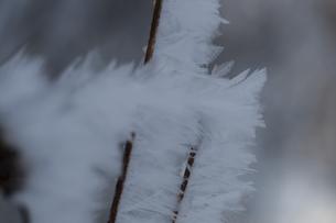 自然が織りなす霜の結晶の写真素材 [FYI00889618]