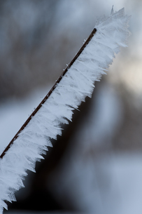 自然が織りなす霜の結晶の写真素材 [FYI00889620]
