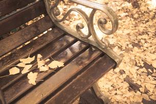 黄金色の木漏れ日の中での写真素材 [FYI00889840]
