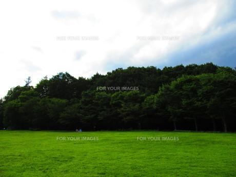 秩父の緑の写真素材 [FYI00889919]