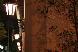 建物の壁の街灯の灯りと樹木の葉の影の写真素材 [FYI00889925]