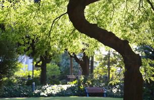 晴れた公園の木々の緑とベンチの写真素材 [FYI00889926]