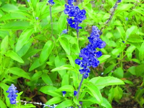 9月の花の写真素材 [FYI00889938]