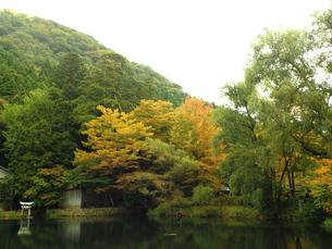 湯布院の秋 金鱗湖の写真素材 [FYI00890288]