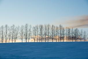 冬の夕暮れの空とシラカバ並木の写真素材 [FYI00890344]