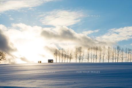 冬の夕暮れの丘とシラカバ並木の写真素材 [FYI00890350]