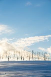 冬の夕暮れの丘とシラカバ並木の写真素材 [FYI00890351]