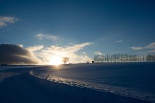 冬の夕暮れの丘とシラカバ並木の写真素材 [FYI00890352]