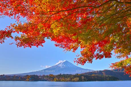 秋の河口湖から見る富士山と紅葉の写真素材 [FYI00891416]