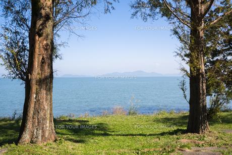 琵琶湖湖畔のメタセコイアの写真素材 [FYI00891598]