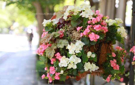 晴れた街の歩道脇に飾られた花飾りの写真素材 [FYI00891614]