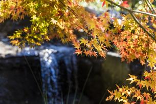 秋の東京、水辺の紅葉の写真素材 [FYI00892024]