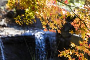 秋の東京、水辺の紅葉の写真素材 [FYI00892029]