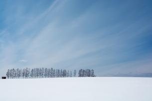 冬の空とシラカバ並木の写真素材 [FYI00892229]