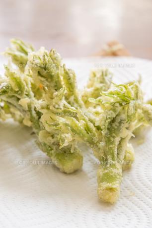 春の山菜たらの芽の天ぷらの写真素材 [FYI00892477]