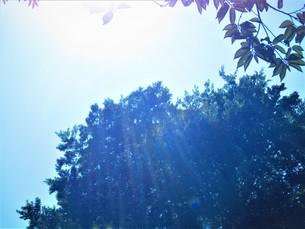 光と自然の空の写真素材 [FYI00892573]