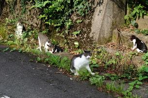 石見銀山の風景 野良猫の集まりの写真素材 [FYI00892738]