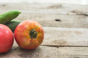 家庭菜園で穫れたトマトの写真素材 [FYI00893375]