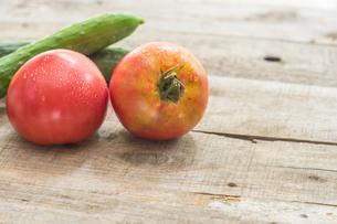 家庭菜園で穫れたトマトの写真素材 [FYI00893376]