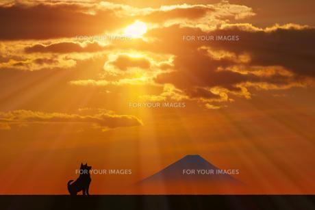 富士山と犬に朝日のイラスト素材 [FYI00893392]
