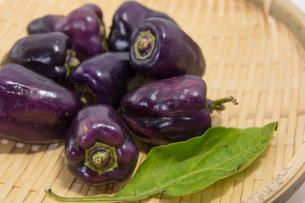 紫色のピーマンの写真素材 [FYI00893399]
