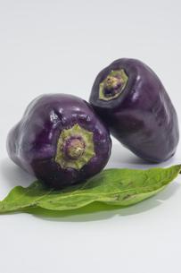 紫色のピーマンの写真素材 [FYI00893412]