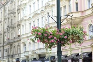 フラワーバスケットのある風景(チェコ・プラハ歴史地区・コジ通り)の写真素材 [FYI00893627]