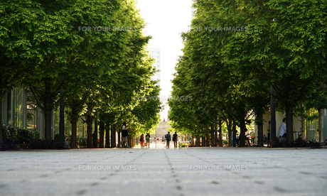 広場の緑の木立の写真素材 [FYI00893636]