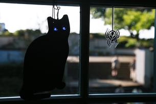 部屋の窓の猫の飾りの写真素材 [FYI00893639]