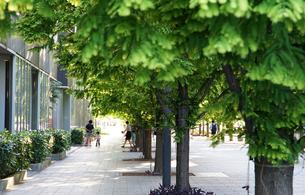 街の広場の緑の木立の写真素材 [FYI00893641]