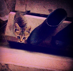 ねぇ 猫の写真素材 [FYI00893780]