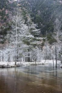 上高地田代池の霧氷の写真素材 [FYI00893848]
