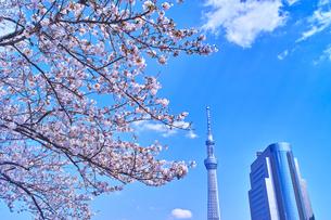 浅草 隅田川堤防から見た風景の写真素材 [FYI00894069]