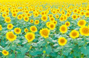 真夏の光景の写真素材 [FYI00894450]