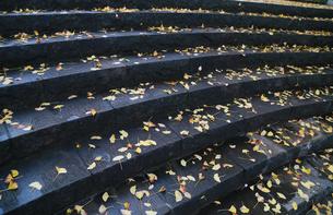 雨で濡れた階段のイチョウの落ち葉の写真素材 [FYI00894535]