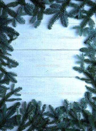 薄暗いモミの葉のフレームの写真素材 [FYI00894854]