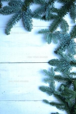 薄暗いモミの葉のフレームの写真素材 [FYI00894855]
