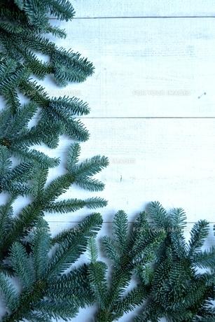 薄暗いモミの葉のフレームの写真素材 [FYI00894856]