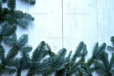 薄暗いモミの葉のフレームの写真素材 [FYI00894859]