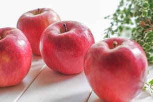 秋の味覚、林檎の写真素材 [FYI00894947]