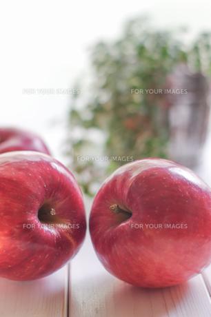 秋の味覚、林檎の写真素材 [FYI00894954]