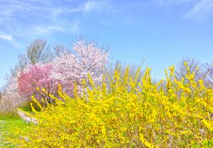 カラフルな日本の春の写真素材 [FYI00894960]
