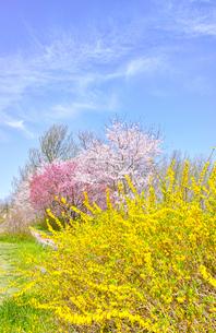 カラフルな日本の春の写真素材 [FYI00894962]