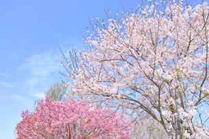 カラフルな日本の春の写真素材 [FYI00894964]