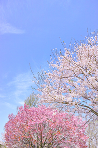 カラフルな日本の春の写真素材 [FYI00894966]